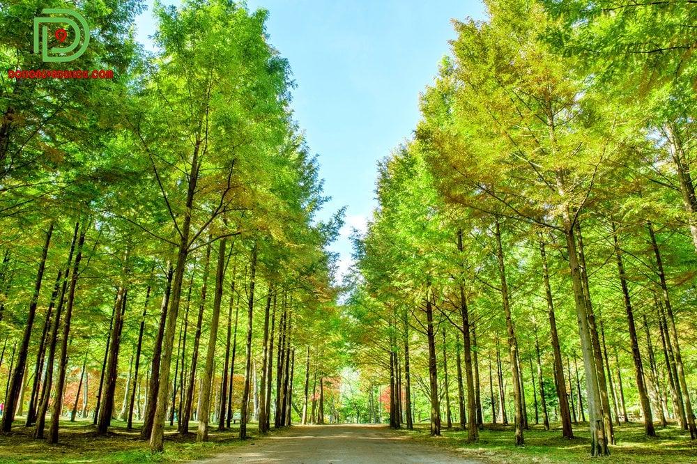 cây xanh đảo nami