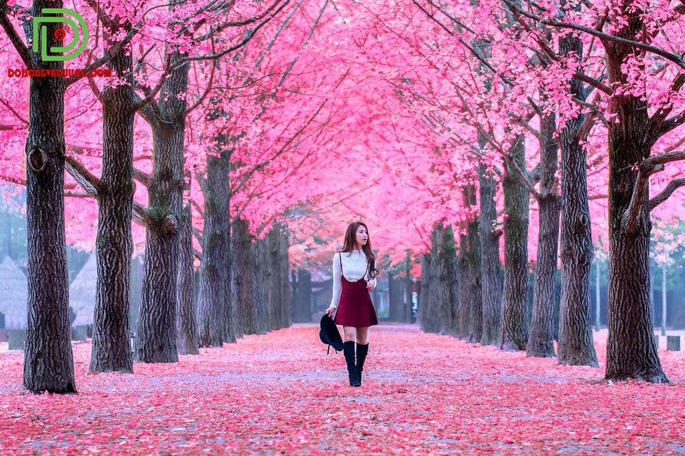 Khách tham quan bên hàng cây mùa lá đỏ