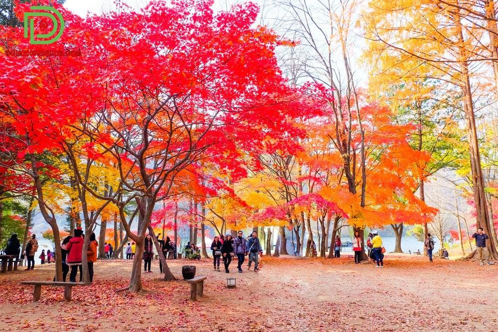 Hàn Quốc mùa lá đỏ