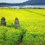 Mã vùng Hàn Quốc và cách gọi điện thoại Việt Nam sang Hàn Quốc
