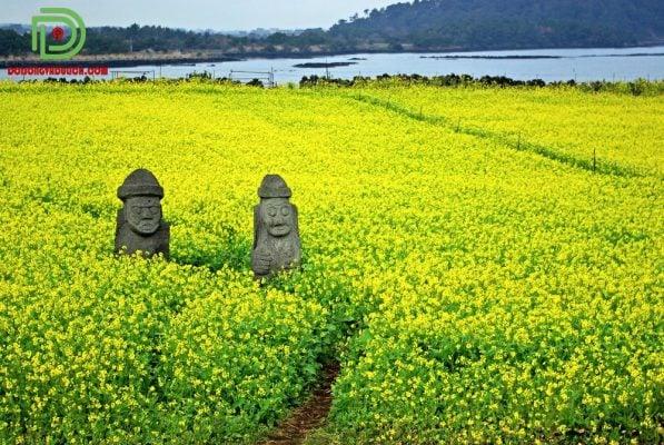 tượng thần đá trên cách đồng hoa cải ở đảo jeju